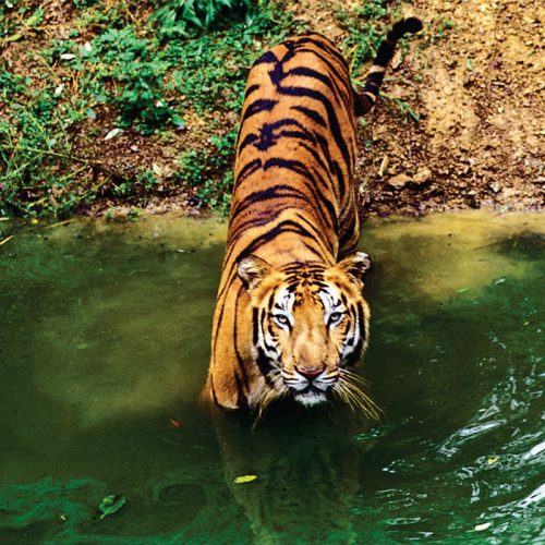Tiger Trails 6 Nights Holiday – India