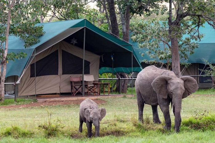 Little Governors Camp – Maasai Mara
